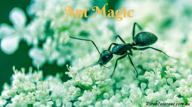 Ant Magic