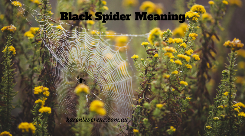 Black Spider Meaning